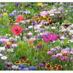Floraison Chrono-Annuelle - Sachet de 1 kg