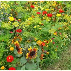 Floraison Annuelle Tons Chauds - Sachet de 1 kg
