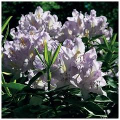 Floraison Annuelle Extra-Nain - Sachet de 1 kg