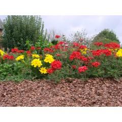 Engrais Géraniums et Plantes Fleuries ALGOFLASH - Bidon de 5 L